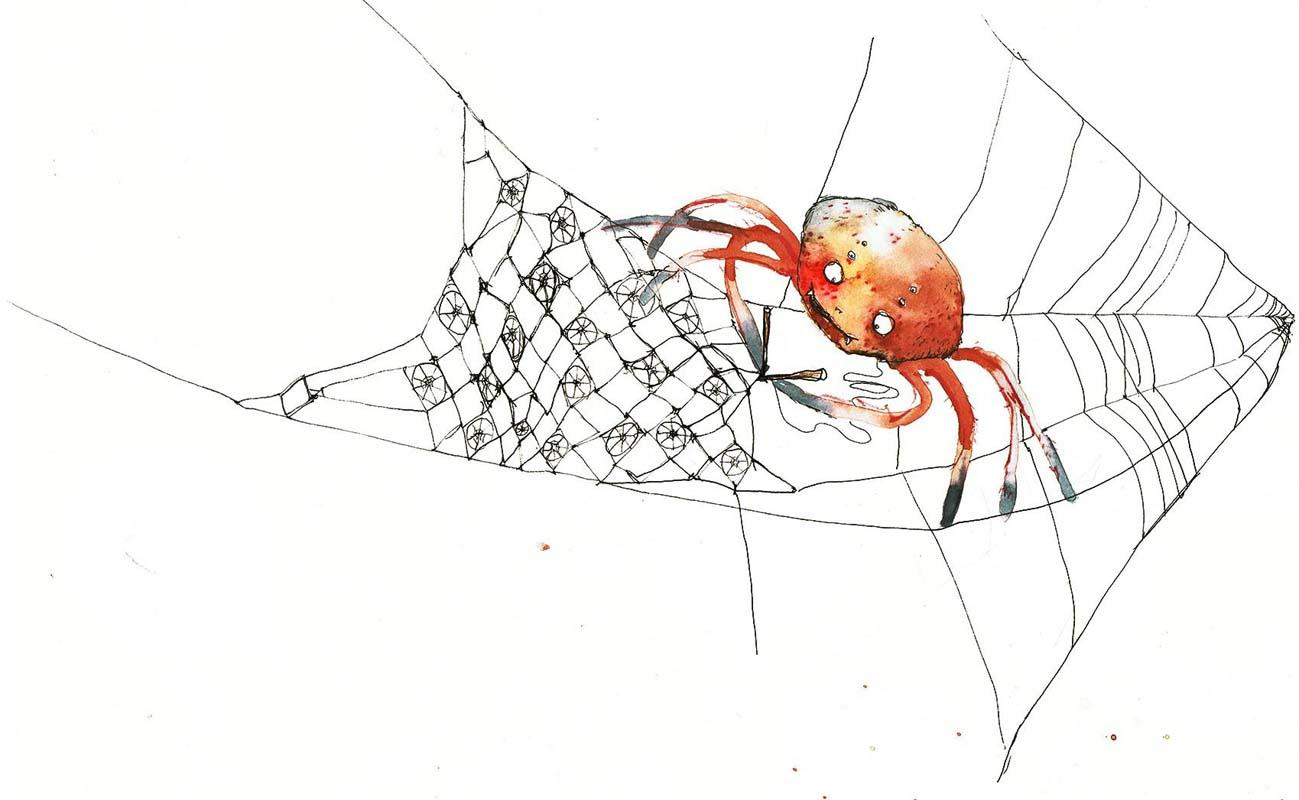 Spinne spinnt